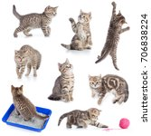 various funny cats set isolated ... | Shutterstock . vector #706838224