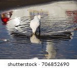 Small photo of A beautiful seagull seabird of the family Laridae in the sub-order Lari reflected in the puddle is enjoying a cool sip of water in the parking area of the park on a summer afternoon.