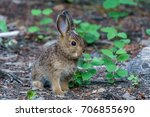 Stock photo baby brown hare or bunny on forest floor 706855690