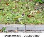 green woodpecker on the road | Shutterstock . vector #706899589