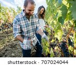 young adult man harvesting red... | Shutterstock . vector #707024044
