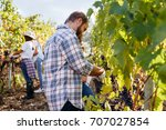 young adult man harvesting red... | Shutterstock . vector #707027854
