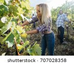 young woman harvesting red... | Shutterstock . vector #707028358