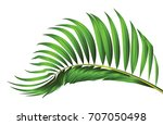 green leaf of palm tree... | Shutterstock .eps vector #707050498