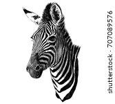 Zebra Head Sketch Vector...
