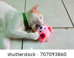 Stock photo white cat playing doll 707093860