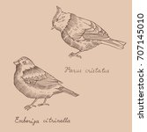 birds species line art with... | Shutterstock .eps vector #707145010