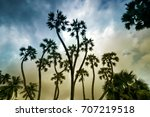 palm trees with dramatic sky in ... | Shutterstock . vector #707219518
