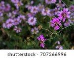 pink flowers closeup | Shutterstock . vector #707266996