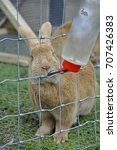 A Beautiful Brown Rabbit...