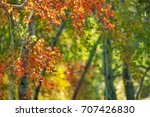 autumn forest with trees and... | Shutterstock . vector #707426830