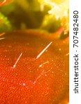 the venus flytrap  also...   Shutterstock . vector #707482480