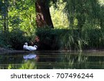 Two Swans Near The Water In A...