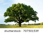 Stock photo lonely green oak tree in the field 707501539