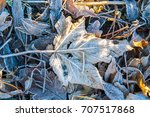 frost covered leaves lying on...   Shutterstock . vector #707517868