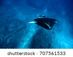 manta ray in blue sea | Shutterstock . vector #707561533