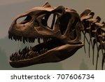 Small photo of Dinosaur skull