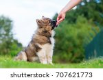 hand gives an elo puppy who... | Shutterstock . vector #707621773