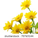 Stock photo yellow daisy flower isolated on white 70765144