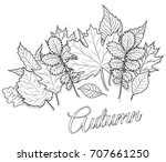 Autumn Leaves Set For Coloring...