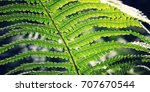 Fern Leaf In The Forests Of...