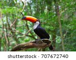 colorful tucan in the wild | Shutterstock . vector #707672740