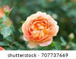 beautiful orange  yellow and... | Shutterstock . vector #707737669