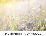 meadow flowers in early sunny... | Shutterstock . vector #707783020