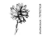chrysanthemum ink drawing... | Shutterstock .eps vector #707827618
