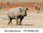 a black rhinoceros  diceros... | Shutterstock . vector #707838154