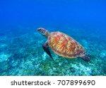 marine turtle in seawater. sea... | Shutterstock . vector #707899690