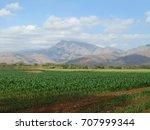 corn fields.   Shutterstock . vector #707999344
