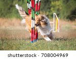 Sport For Dogs Agility Obstacl...