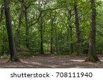 a beech green forest with tall... | Shutterstock . vector #708111940