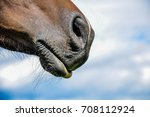 Horse Nostril And Lips On...