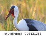 wattled crane adult in... | Shutterstock . vector #708121258