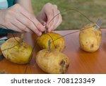scientific experiment on...   Shutterstock . vector #708123349