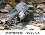 a crafty komodo dragon  taken...   Shutterstock . vector #70812715
