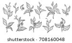 set of tea bush branches with... | Shutterstock . vector #708160048