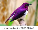 beautiful shimmering male... | Shutterstock . vector #708160960