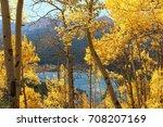 Aspen Trees in Breckenridge, CO - stock photo