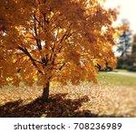 autumn glow | Shutterstock . vector #708236989