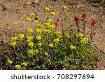 Small photo of Harsh Paintbrush (Castilleja hispida), Wooly Sunflower (Eriopyllum lanatum), Owl Clover (Orthocarpus imbricatus), Larkspur (Delphinium menziesii), and Sulfur Flower (Eriogonum umbellatum). Oregon