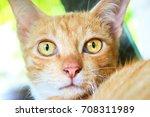 Orange Kitten With Yellow Eyes.
