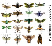 big set of color insects  bugs  ... | Shutterstock .eps vector #708357343