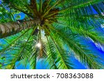 Coconut Tree  Nature  Tree
