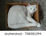 white cat in cardboard box from ... | Shutterstock . vector #708381394