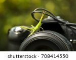 macro photography of... | Shutterstock . vector #708414550
