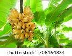 bunch of  banana  banana tree... | Shutterstock . vector #708464884
