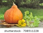Pumpkin With Leaf And Flower I...